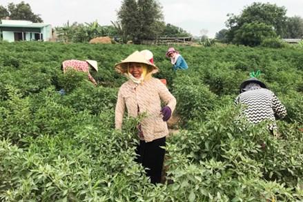 Mặt trận Phước Ninh (Ninh Thuận): Xây dựng mô hình tự quản ở khu dân cư