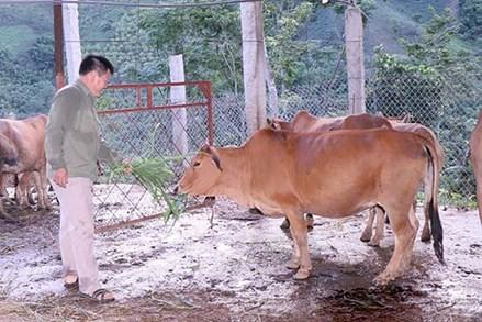 Nguồn vốn chính sách giúp đồng bào dân tộc thiểu số huyện Bắc Yên thoát nghèo