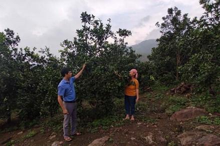 Công tác giảm nghèo ở Phúc Khánh