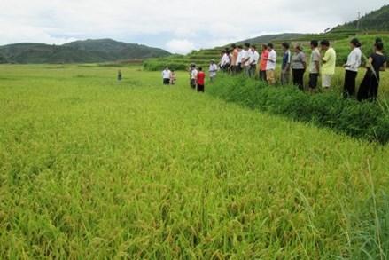 Lai Châu: Đồng lòng xây dựng nông thôn mới