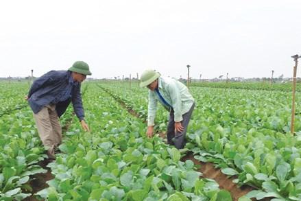 Xây dựng nông thôn mới ở Hà Nội: Mê Linh đẩy mạnh sản xuất nông nghiệp hàng hóa