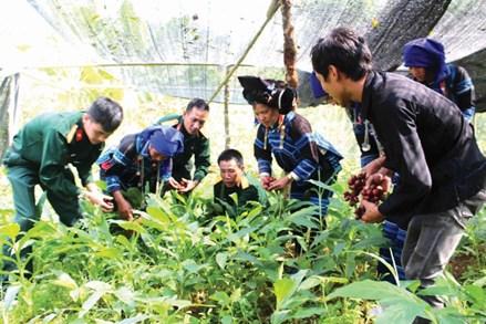 Lào Cai: Phát huy tiềm năng, thế mạnh giảm nghèo bền vững