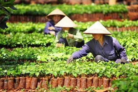 Đồng Nai: Dẫn đầu cả nước về xây dựng nông thôn mới nâng cao