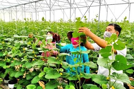 """An Giang tăng cường bảo vệ """"vùng xanh"""" để phát triển kinh tế"""