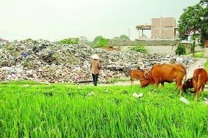Ô nhiễm môi trường - Vấn đề cấp bách cần được quan tâm trong xây dựng nông thôn mới hiện nay