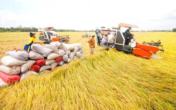"""Xuất khẩu gạo: Bị phản ánh """"không tiếp thu"""" ý kiến, Bộ Công Thương nói gì?"""