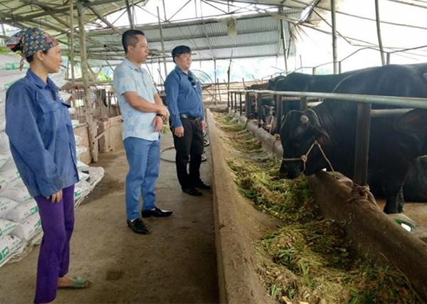 Yên Bái: Mặt trận Tổ quốc huyện Trấn Yên vận động nhân dân tham gia xây dựng nông thôn mới