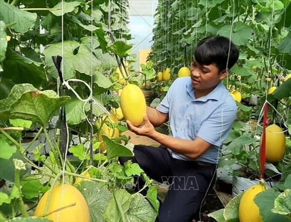 Nỗ lực giảm nghèo bền vững ở huyện miền núi Bác Ái, Ninh Thuận